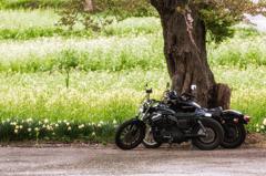 春のバイクツーリング