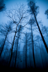 Morning Blue ~ A wooden silhouette  ~