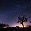 宇宙(そら)を仰ぐヤマナシの木