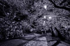 懐古園の夜桜 〜石の小道〜
