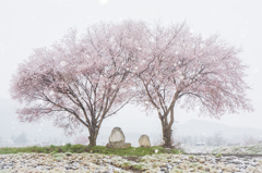 桜と雪と道祖神
