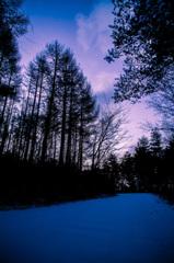 夜明けの林道