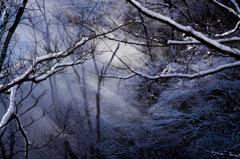 幻想の森 Vol.2