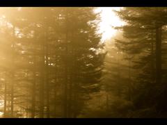 霧の中の高ボッチ <輝霧>