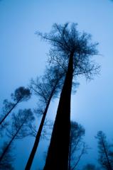 Morning Blue ~ Arboreal vegetation ~
