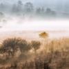 霧の中の湿原