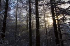 霧纏う森と光芒 2