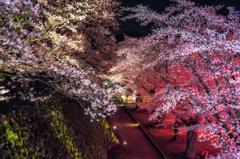 懐古園の夜桜 〜試写〜