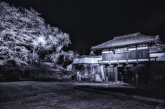 懐古園の夜桜 〜三の門〜