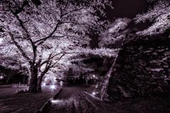 懐古園の夜桜 〜石垣〜