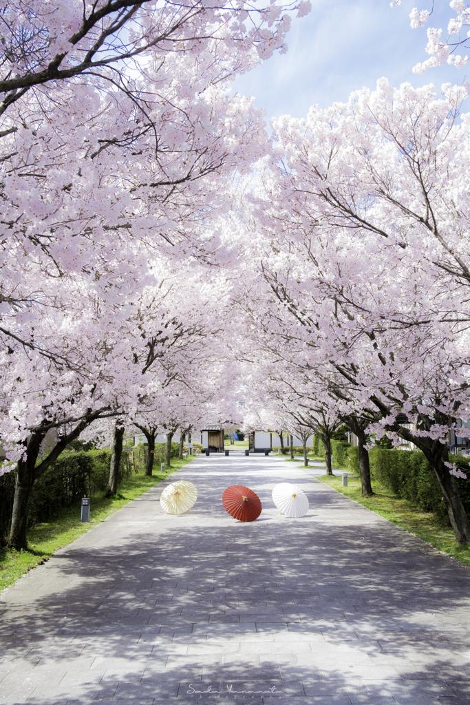ひと時の春、