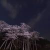 夜空に浮かぶ桜色、、、