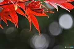 晩秋の輝き、、、。