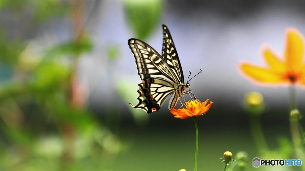 お蔵に中で舞う蝶~⑤