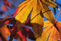 残る秋を求めて、、、ⅱ