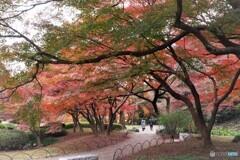 残る秋~ⅶ