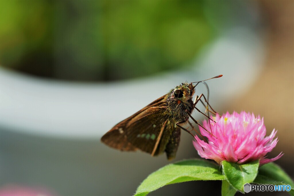 長月の蝶達~ⅵ