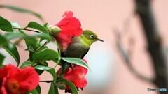 この花も好きだよ~、、、。