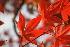 残る秋、、、③