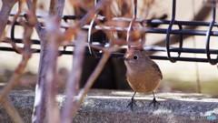 旅の鳥ーⅤ