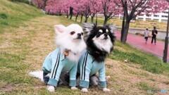 花見犬~ⅲ