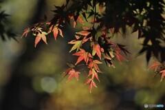 秋彩色~ⅲ