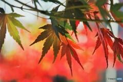 秋彩色~ⅳ