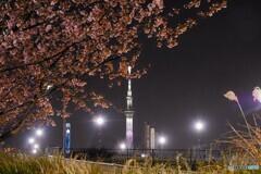オオカンザクラ夜桜~ⅺ