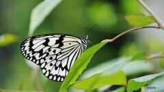 冬の蝶~⑳