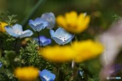 黄色の奥のブルー