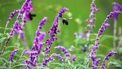 引き気味な蜂。