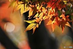 残る秋、、、②