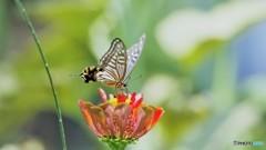 お蔵に中で舞う蝶~④