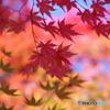 輪王寺の秋ー⑩