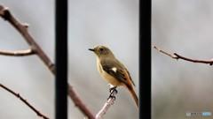 旅の鳥ーⅧ