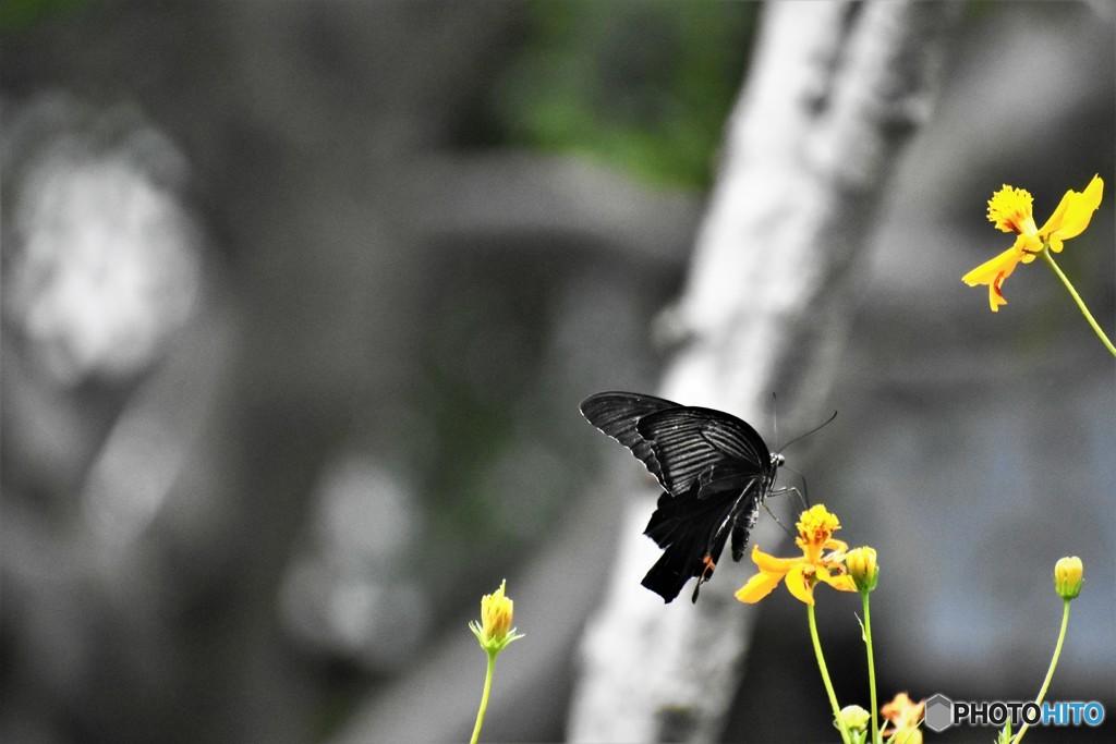 黒背景の黒、、、。