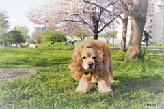 桜とワンコ