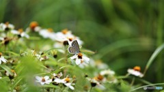 引き気味な蝶~ⅱ