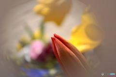 卯月花ー6