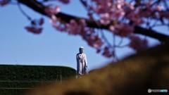 安行桜~ⅵ