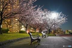 オオカンザクラ夜桜~ⅹ