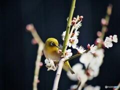 春の使者~ⅱ