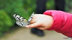 冬の蝶~⑥