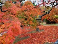 新宿御苑~中の池