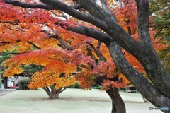 残る秋~ⅺ