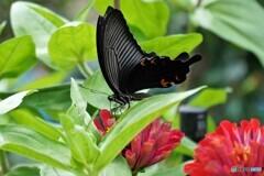 蔵から出た蝶~ⅷ