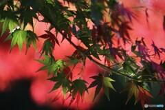 秋彩色~ⅱ