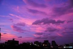 今日の隅田川~②