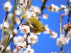 春の使者~ⅲ