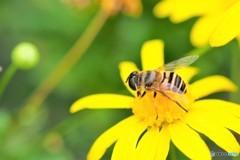 黄花が好きだよ~、、、。